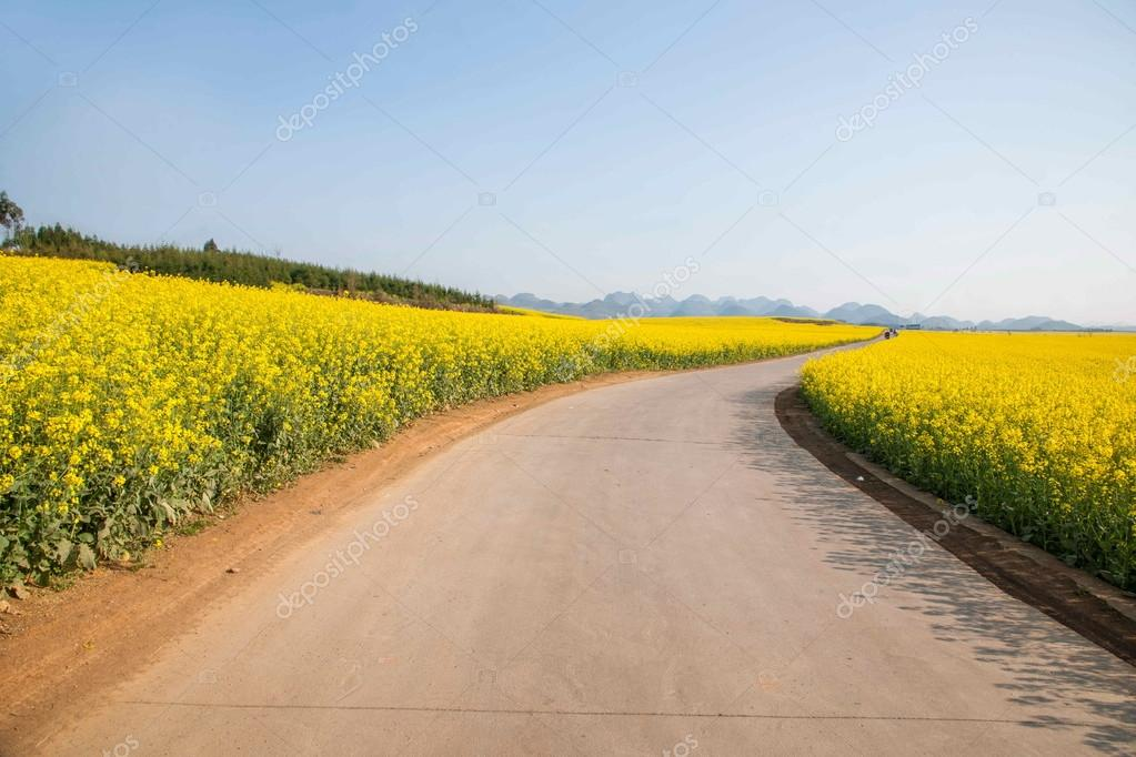Luoping small flower canola flower patch on the side of rural roads Bazi