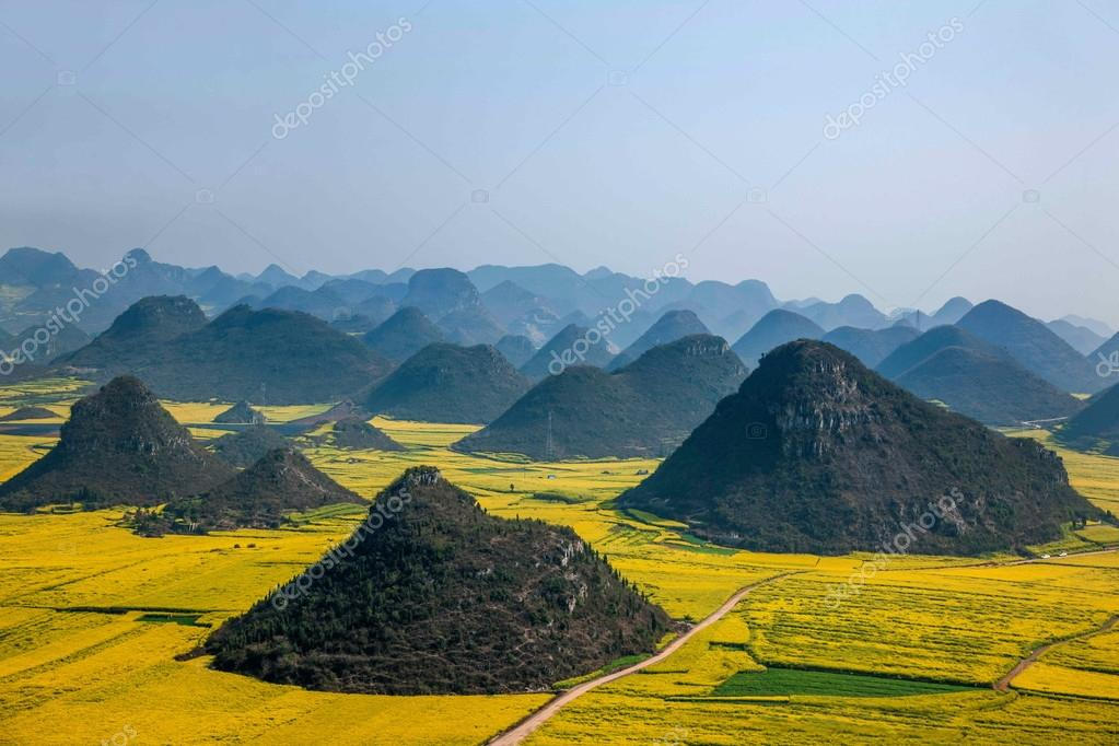 Canola flower Luoping Rooster under the peak