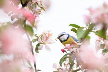 Little bird in beautiful tree worm in mouth
