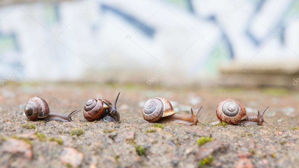 Group of small snails going forward