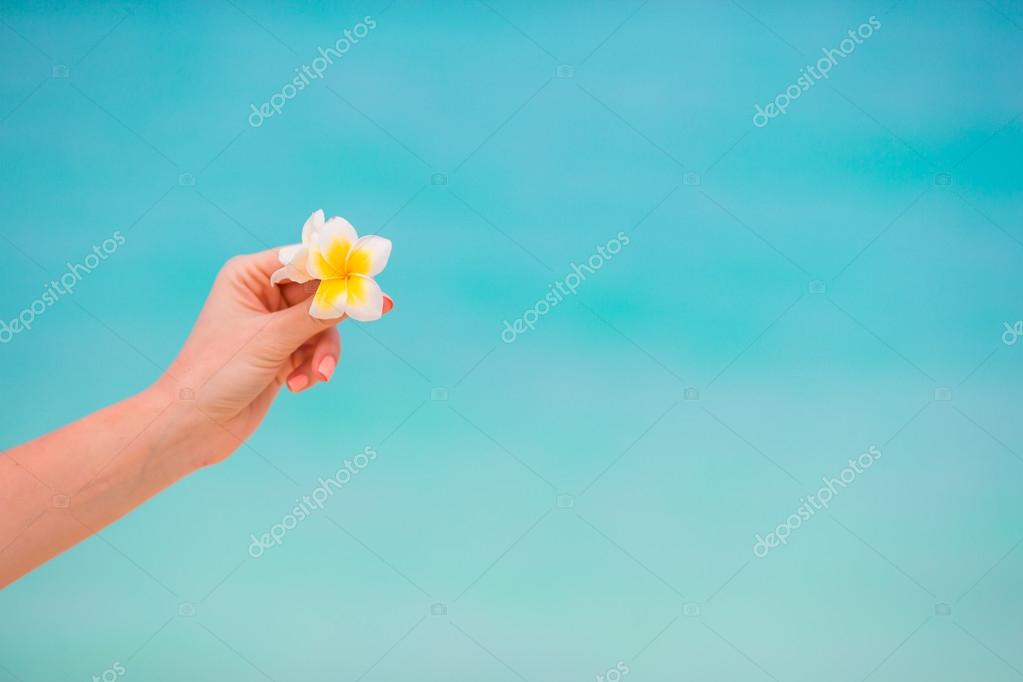 Beautiful frangipani flowers background turquoise sea on white beach beautiful frangipani flowers background turquoise sea on white beach stock photo mightylinksfo