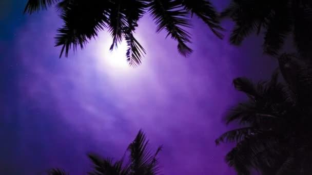 tropická noc dlaně