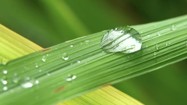 Close up drops of dew on fresh green leaves with sunlight on blurred greenery background. Abstract nature background for creative designs.