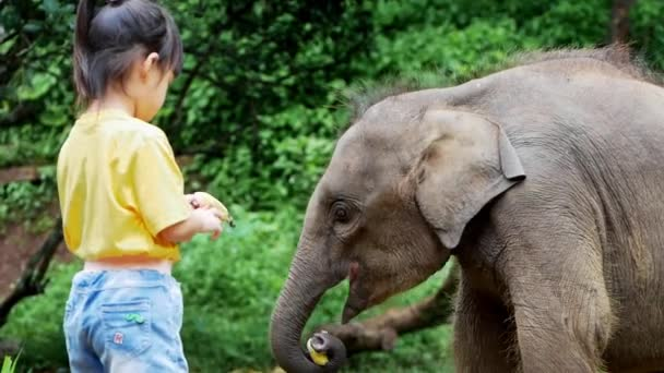 Cute little girl feeding bananas to baby elephants in the elephant camp. Children go on vacation with their families at the zoo. Little girl giving fruit to wild animal.