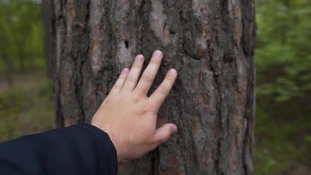 Ruka se dotýká kmene stromu v lese. Mužská ruka dotýkající se mokré kůry stromu