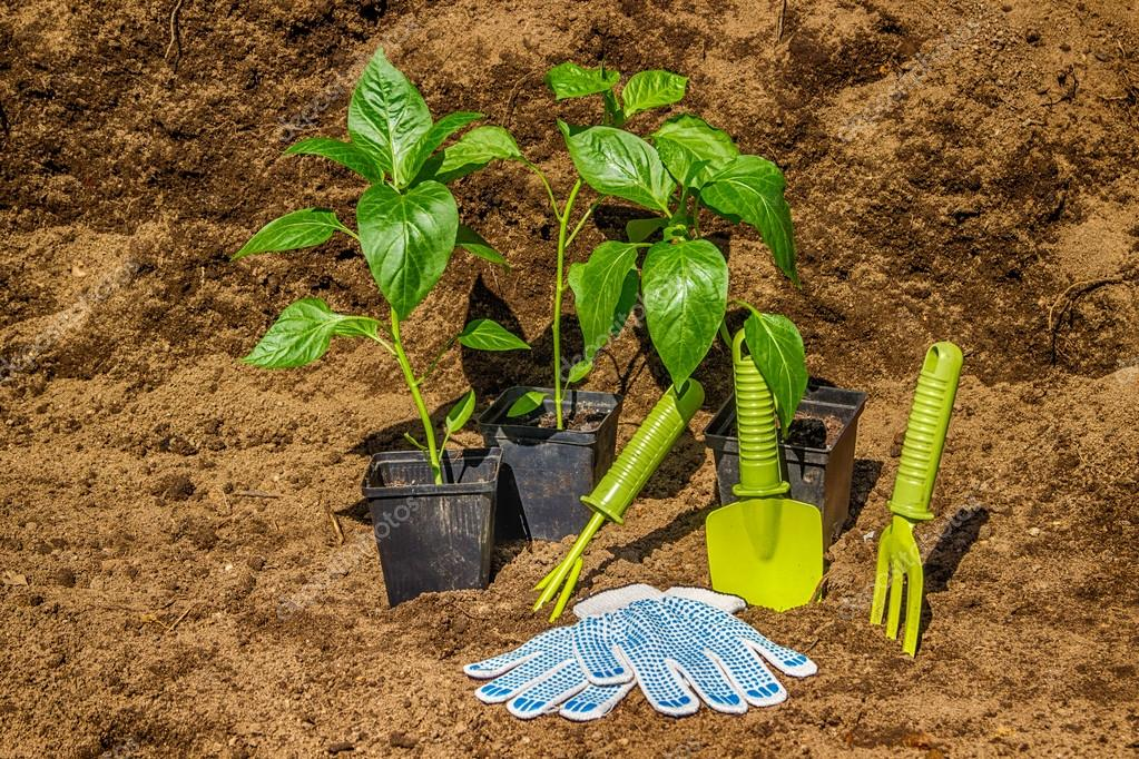 Pot with seedlings  garden tools equipment gloves background  bl