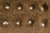 Loch unter die Sämlinge mit weißen Körnchen von mineralischen fertiliz