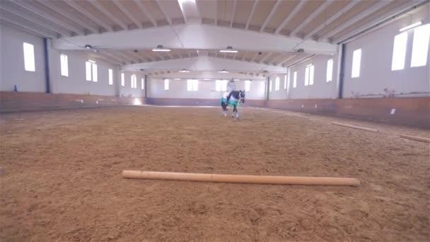 Olympijský koni