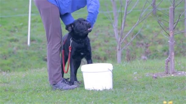 Owner Washing His  Dog