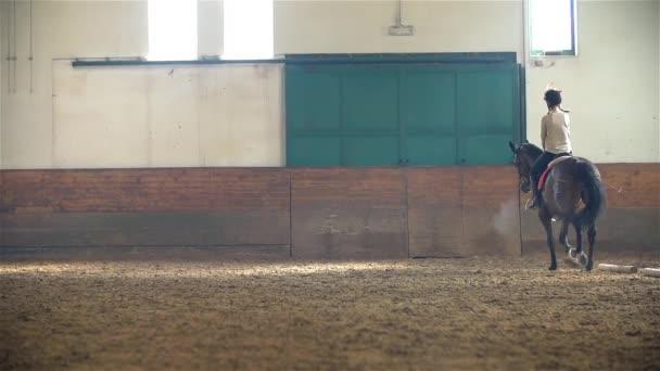 dívka na koni hnědé koně