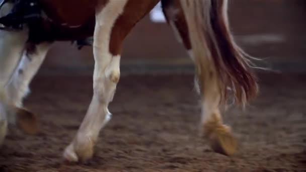 hnědý kůň běží