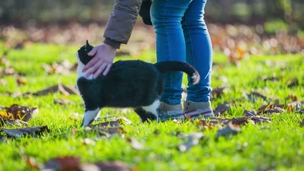 Nő megveregette macska