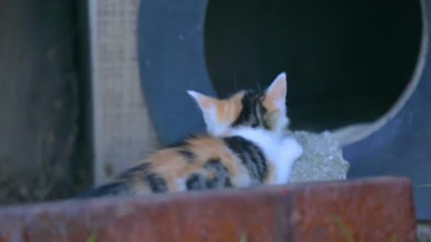 Kis macska feltárása
