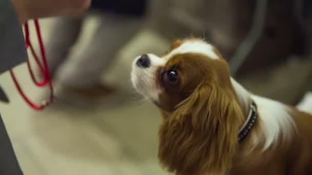 Osoby krmení roztomilý pes