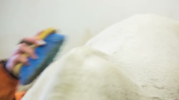 Žena čištění bílý kůň