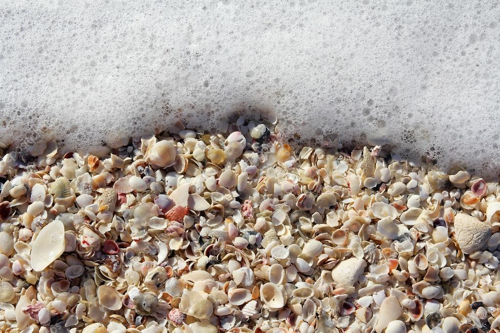 Colección de fondo de conchas de playa enmarcada por el mar océano ...