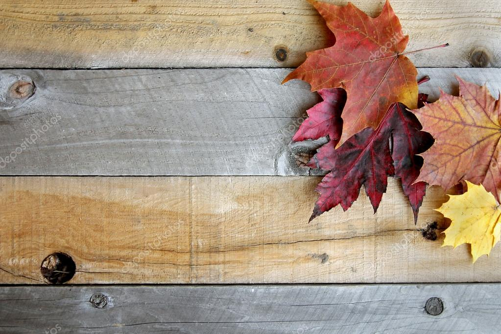 A Variety Of Yellow Orange And Red Autumn Maple Leaves Are Bordering The Top Rustic Wood Board Textured Background Photo By Christin Lola