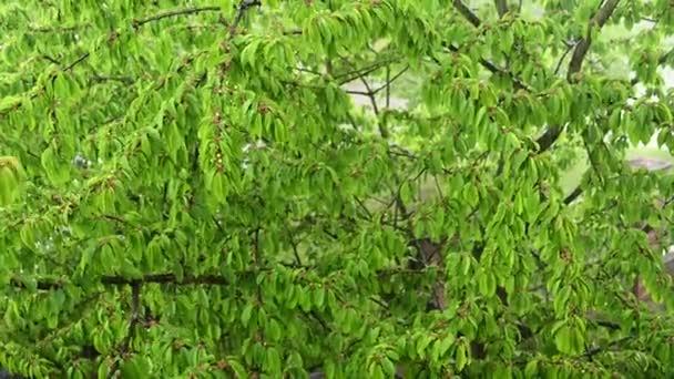 Fotografie letního deště za oknem. Letní déšť.