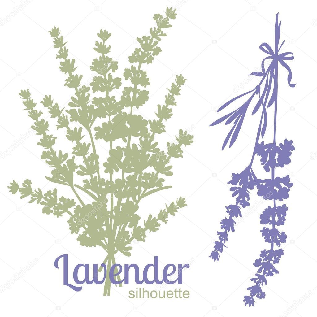 ラベンダーの花のシルエットのセット ストックベクター Zzayko