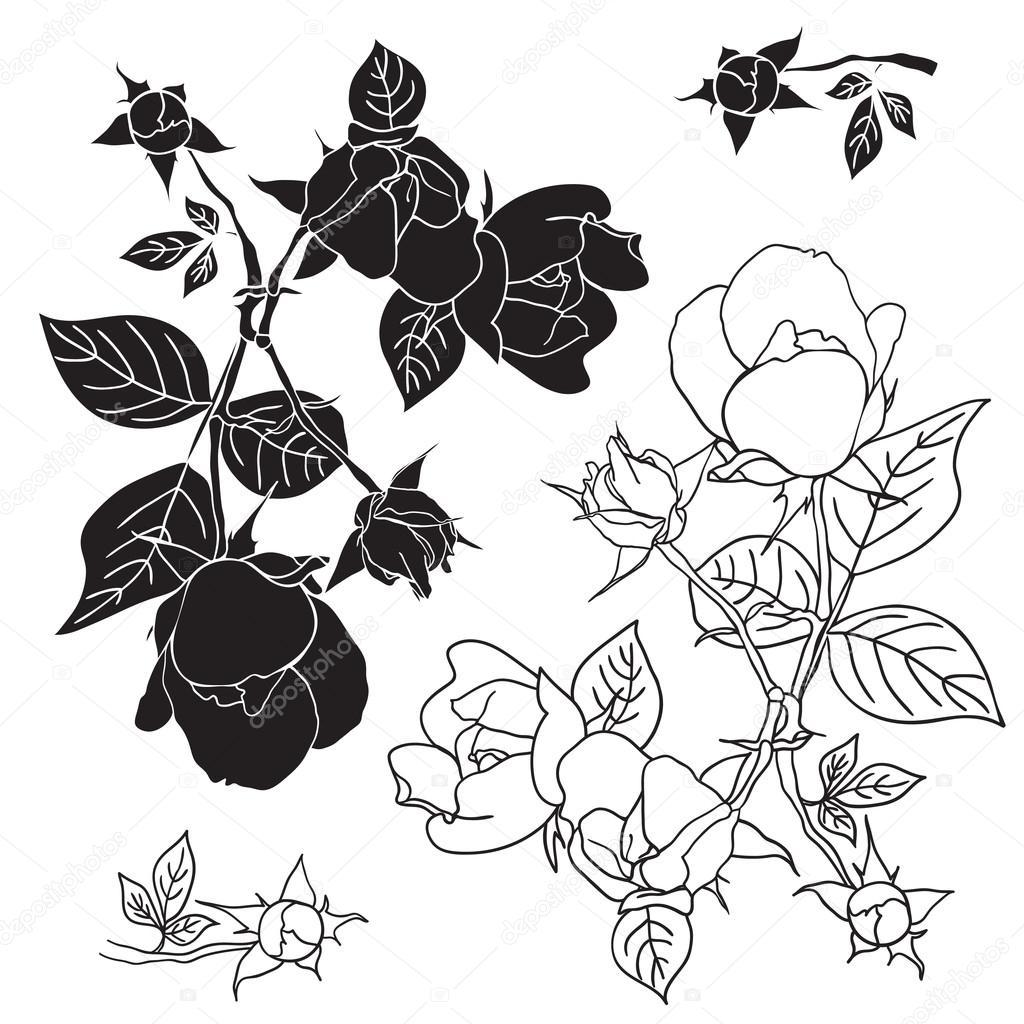 Four black and white roses. Vector illustration.