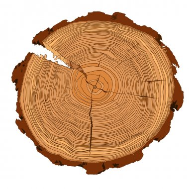 Annual tree growth rings with brown tones drawing of the cross-section of a tree trunk