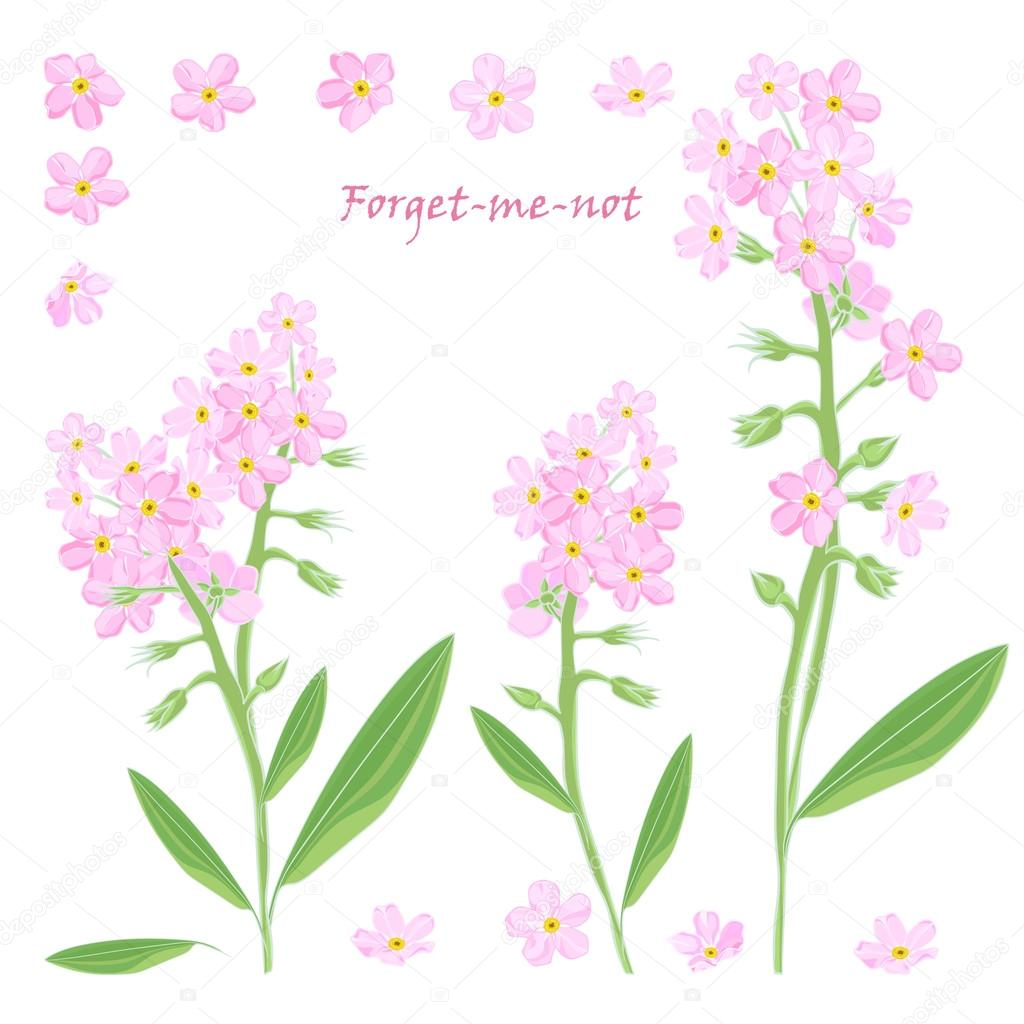 Set Of Bouquet Beautiful Pink Forget Me Not Flowers Stock Vector