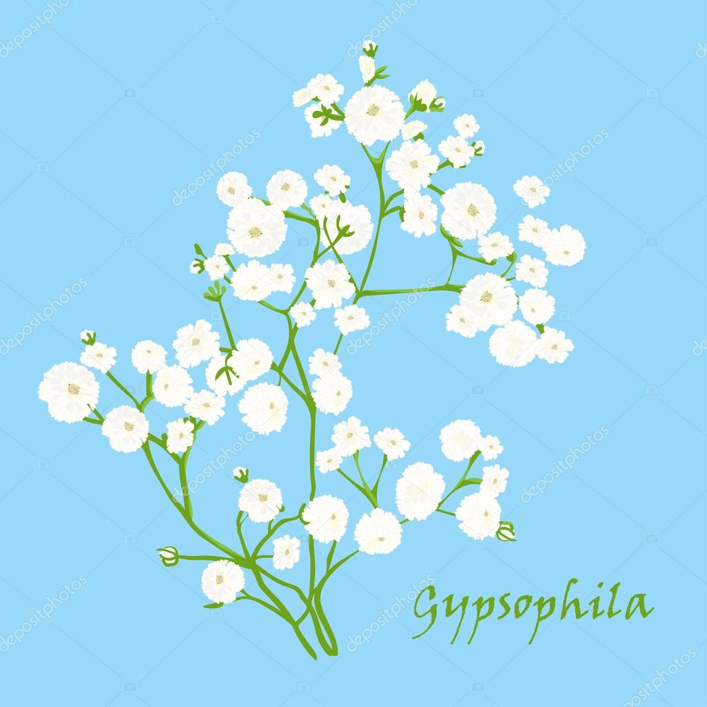 Branch of beautiful hand-drawn gypsophila