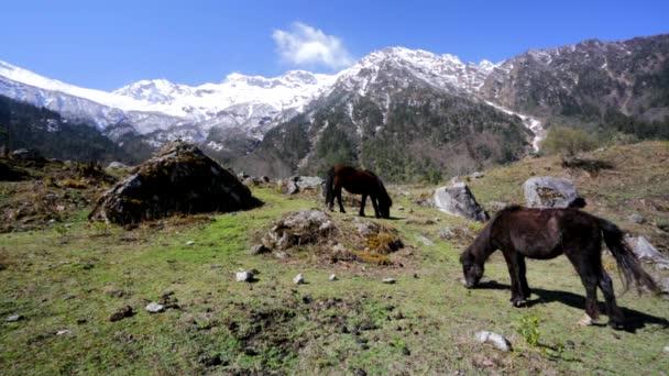 Koně pastvy v horském prostředí