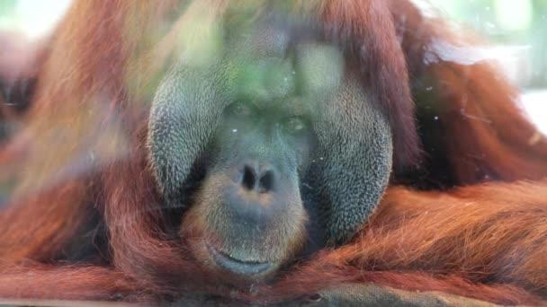 Αποτέλεσμα εικόνας για Singapore Zoo σιγκαπουρη