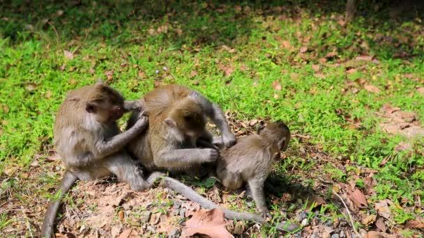 Monkey family in jungle
