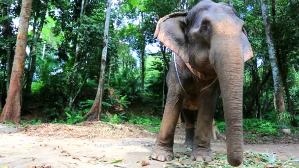 slon pro turistickou jízdu
