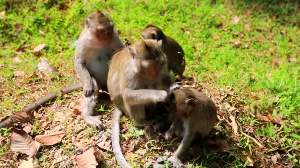 Monkey family in jungle