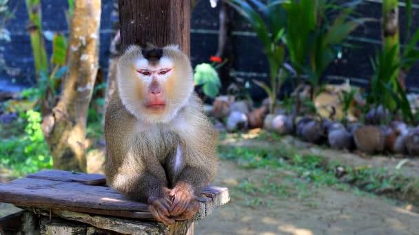 Monkey monkey školy