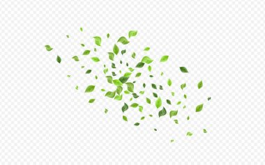 Green Greenery Forest Vector Transparent Background Branch. Flying Leaves Backdrop. Forest Foliage Fresh Plant. Leaf Organic Concept. icon