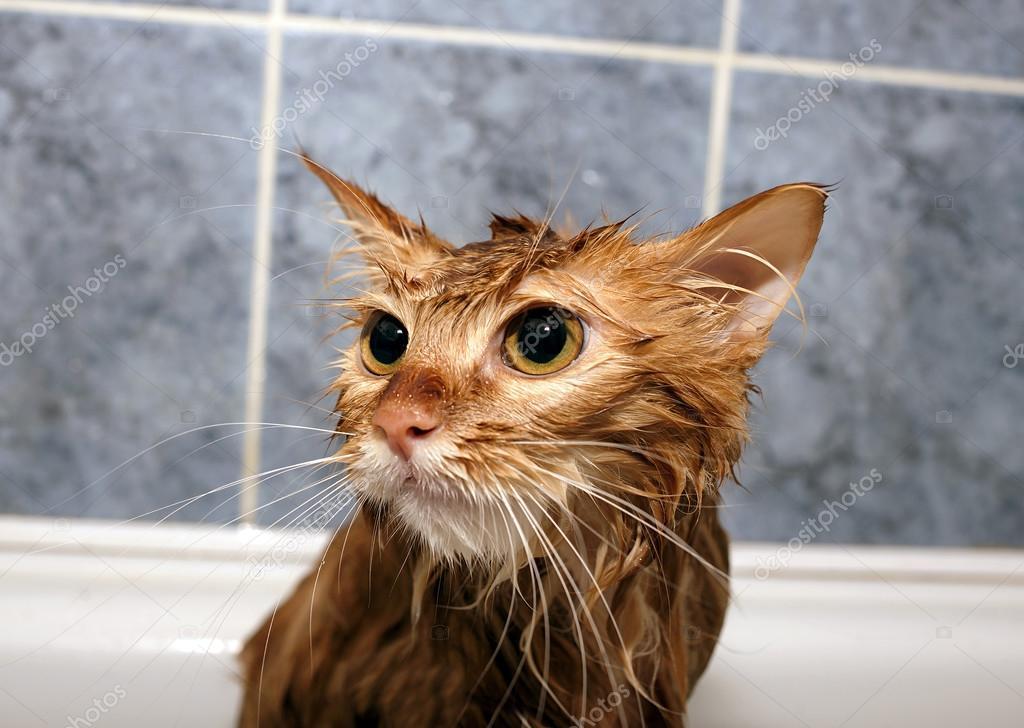 Мокрая морда кота