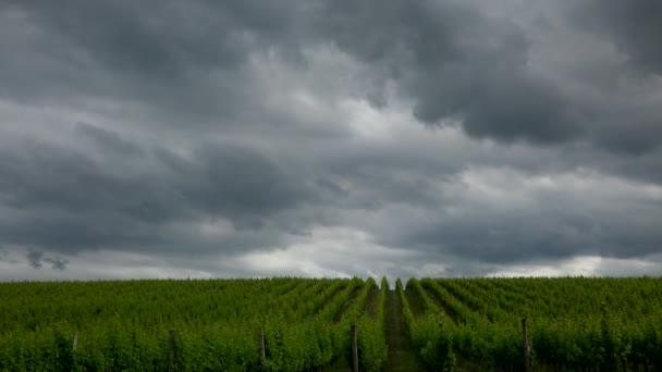 Bordeaux Vineyard při východu slunce na podzim, Entre deux mers, Langoiran, Gironde