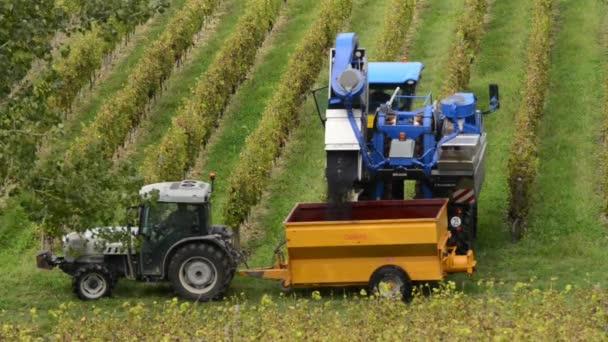 Szőlő betakarító gép szőlőhegyen össze
