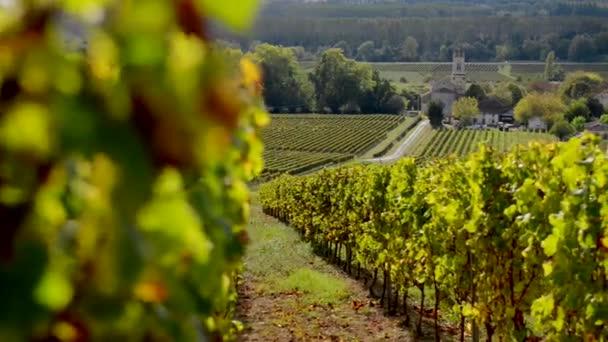 Krajina, Bordeaux vinice na podzim