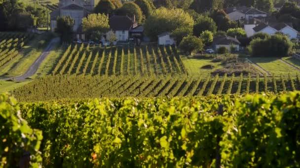 Bordeaux-Weinberg im Herbst
