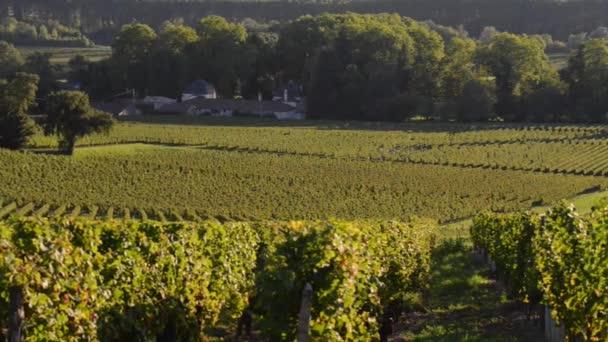 Bordeaux vinice na podzim