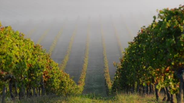 Landscape-Bordeaux vineyard in autumn sunset