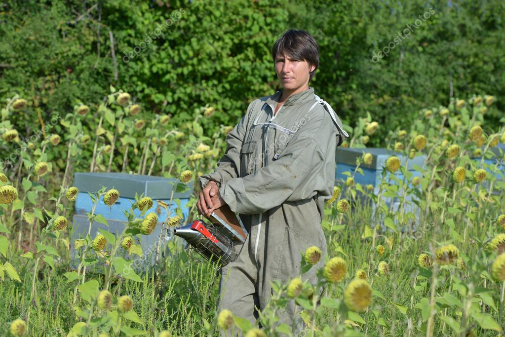 Bee Keeper Working with Bee Hives in a sunflower fiel