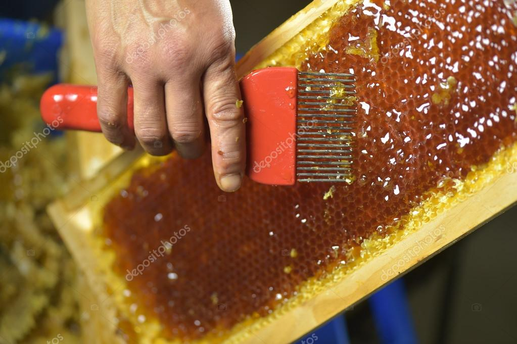Female beekeeper in workshop scraping honeycomb frame