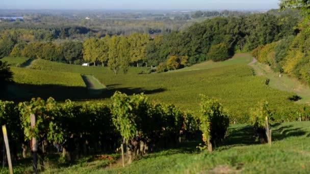 Krásné vinice krajina Bordeaux vinice