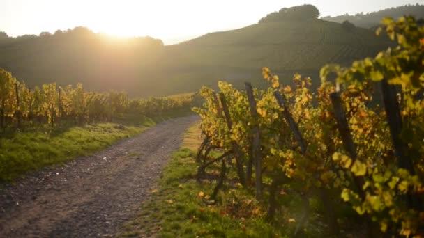 Západ slunce v alsaské vinice Francie