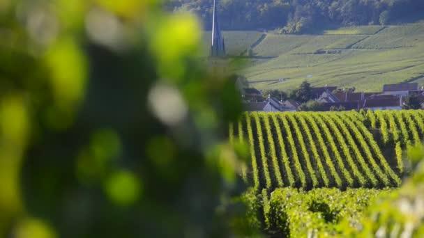 Šampaňské vinic v oblasti Cote des Bar departementu Aube poblíž Reims, Champagne-Ardennes, Francie, Evropa