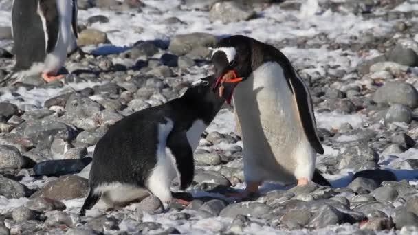 Penguins eating on shore