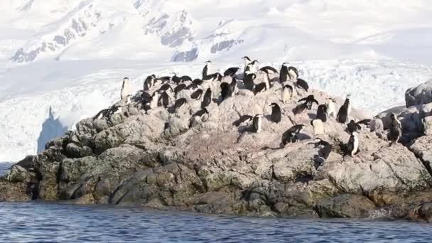Colonia di pinguini sottogola