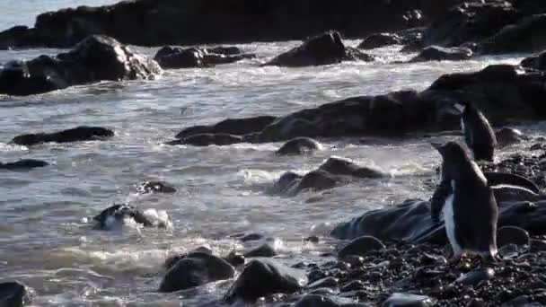 Pingvinek séta a víz