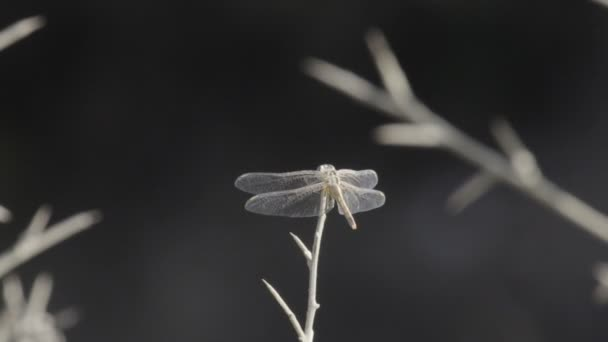 Vážka sedí na proutek